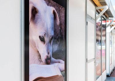 """Vinilo concurso fotografía 2 - Diseño editorial - Maquetación de los soportes """"Feria del Libro de Valladolid 2019"""""""